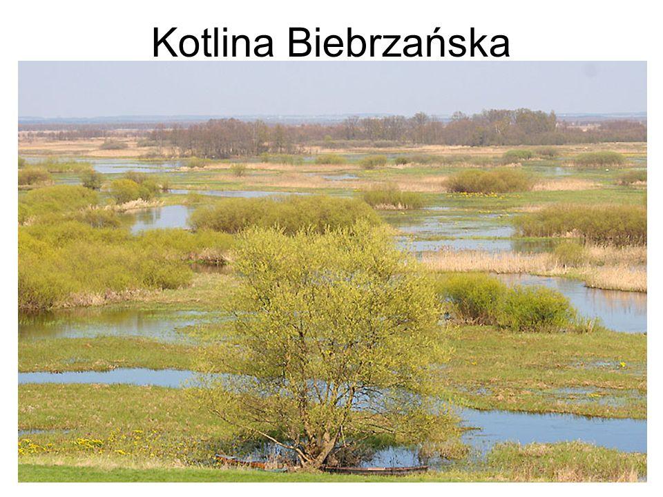 Kotlina Biebrzańska