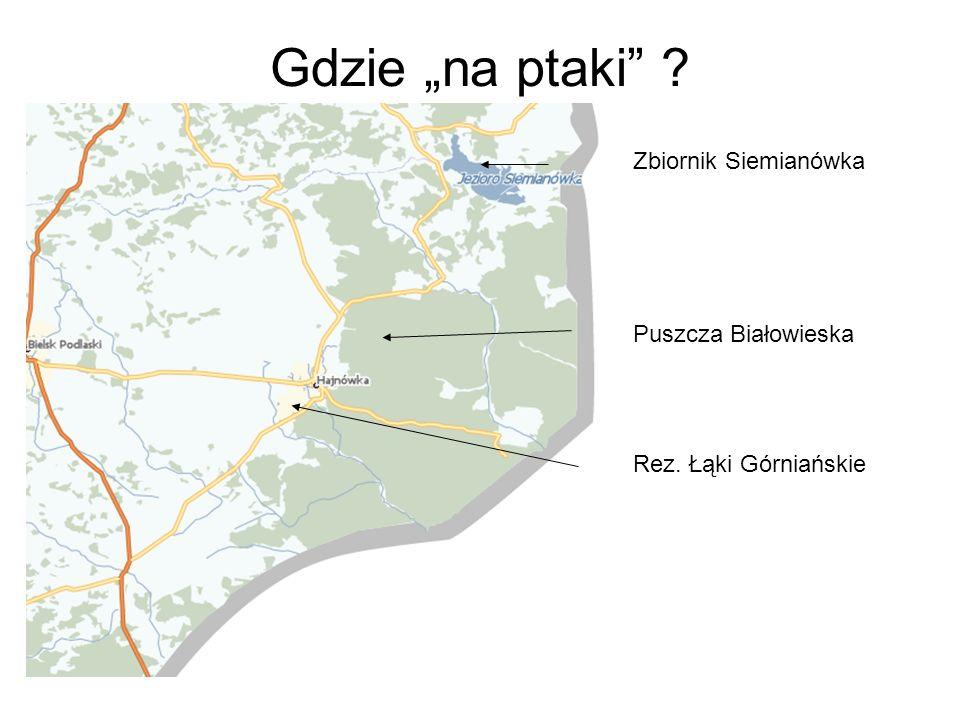 Gdzie na ptaki ? Zbiornik Siemianówka Puszcza Białowieska Rez. Łąki Górniańskie