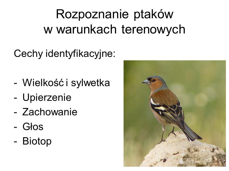 Cechy identyfikacyjne: -Wielkość i sylwetka -Upierzenie -Zachowanie -Głos -Biotop Rozpoznanie ptaków w warunkach terenowych