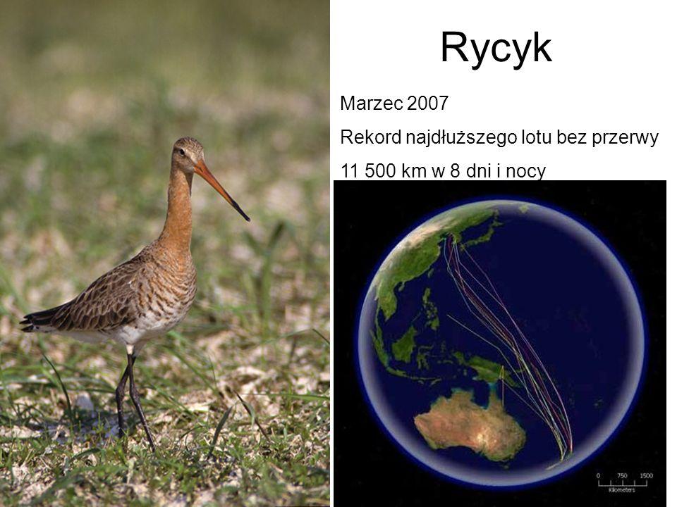 Rycyk Marzec 2007 Rekord najdłuższego lotu bez przerwy 11 500 km w 8 dni i nocy