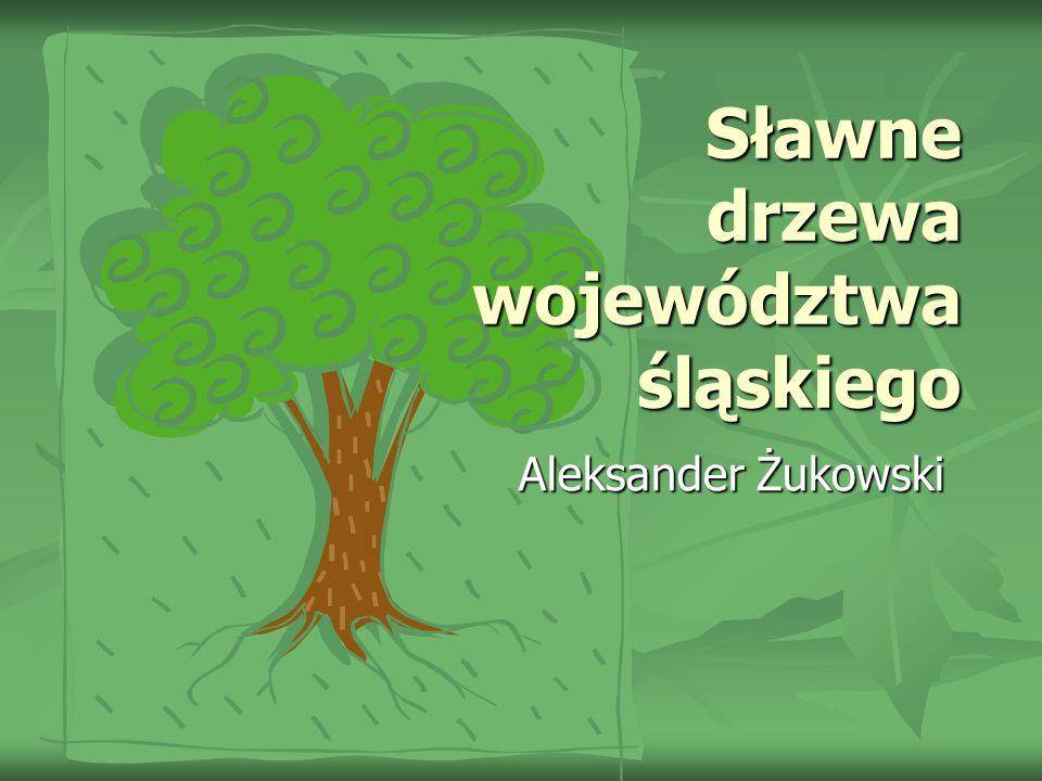 Sławne drzewa województwa śląskiego Aleksander Żukowski