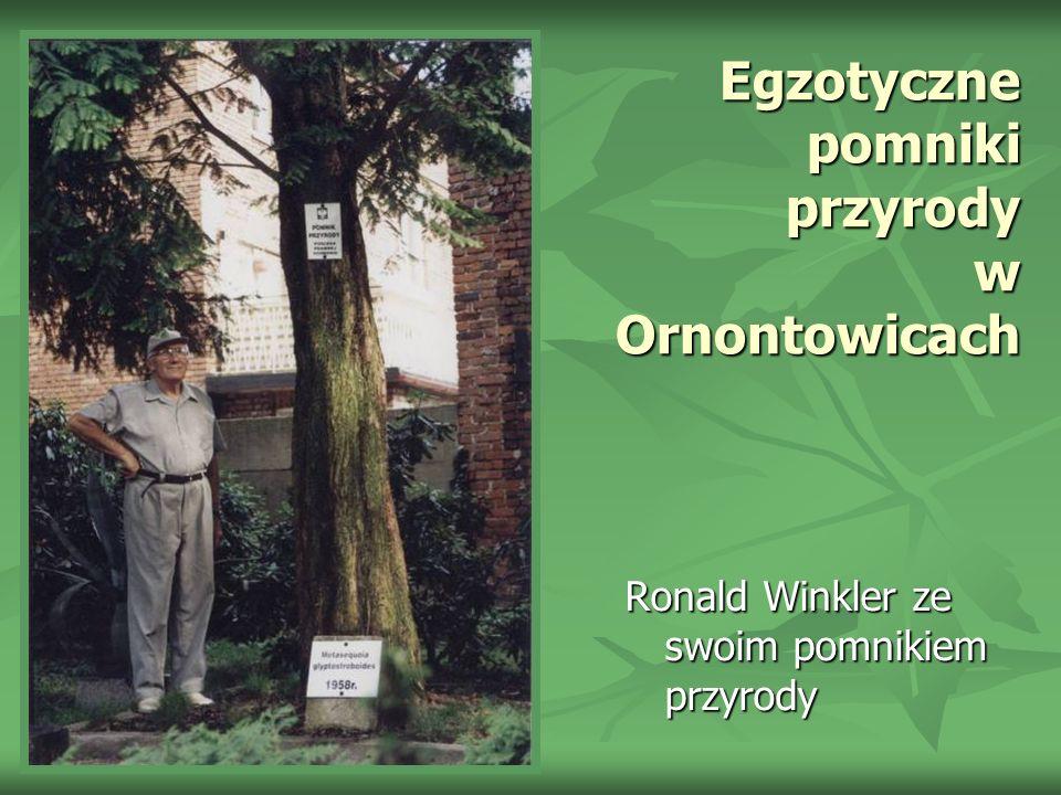 Egzotyczne pomniki przyrody w Ornontowicach Ronald Winkler ze swoim pomnikiem przyrody