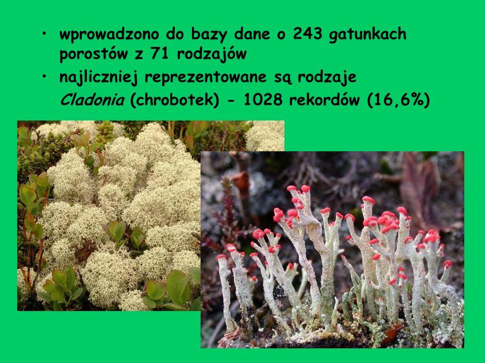 wprowadzono do bazy dane o 243 gatunkach porostów z 71 rodzajów najliczniej reprezentowane są rodzaje Cladonia (chrobotek) - 1028 rekordów (16,6%)