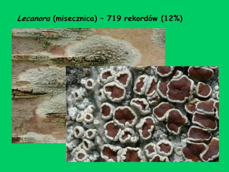 Lecanora (misecznica) – 719 rekordów (12%)