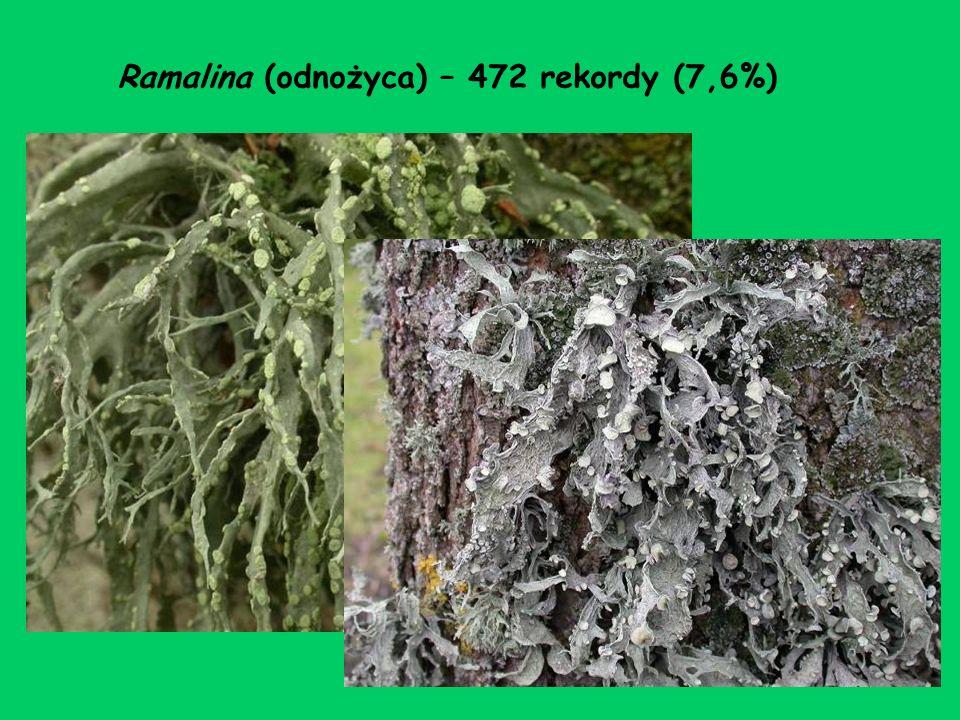 Ramalina (odnożyca) – 472 rekordy (7,6%)