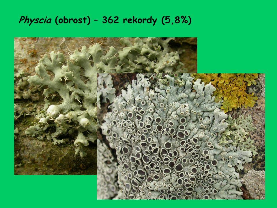 Physcia (obrost) – 362 rekordy (5,8%)