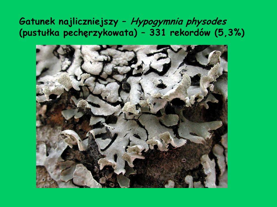Gatunek najliczniejszy – Hypogymnia physodes (pustułka pechęrzykowata) – 331 rekordów (5,3%)
