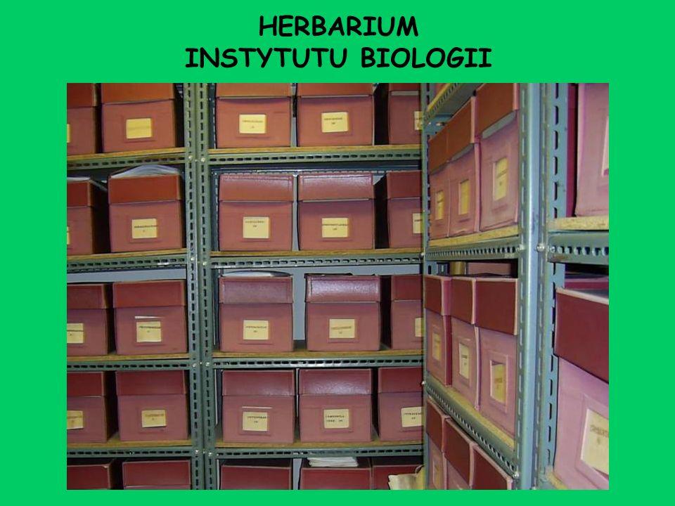 HERBARIUM INSTYTUTU BIOLOGII