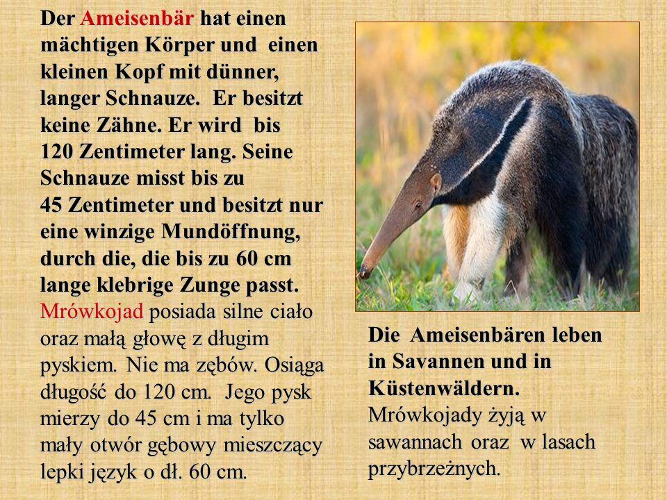 Die Heimat des Damhirsches ist in Europa und in Asien.