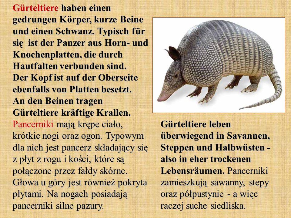 Der Igeltanrek sieht wie sehr kleine Europäische Igel aus.