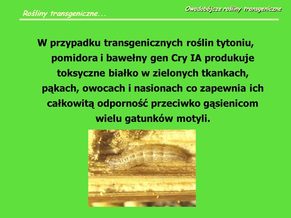 W przypadku transgenicznych roślin tytoniu, pomidora i bawełny gen Cry IA produkuje toksyczne białko w zielonych tkankach, pąkach, owocach i nasionach co zapewnia ich całkowitą odporność przeciwko gąsienicom wielu gatunków motyli.