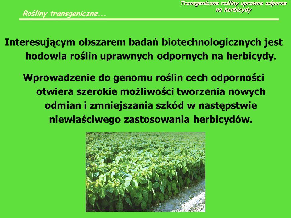 Interesującym obszarem badań biotechnologicznych jest hodowla roślin uprawnych odpornych na herbicydy.