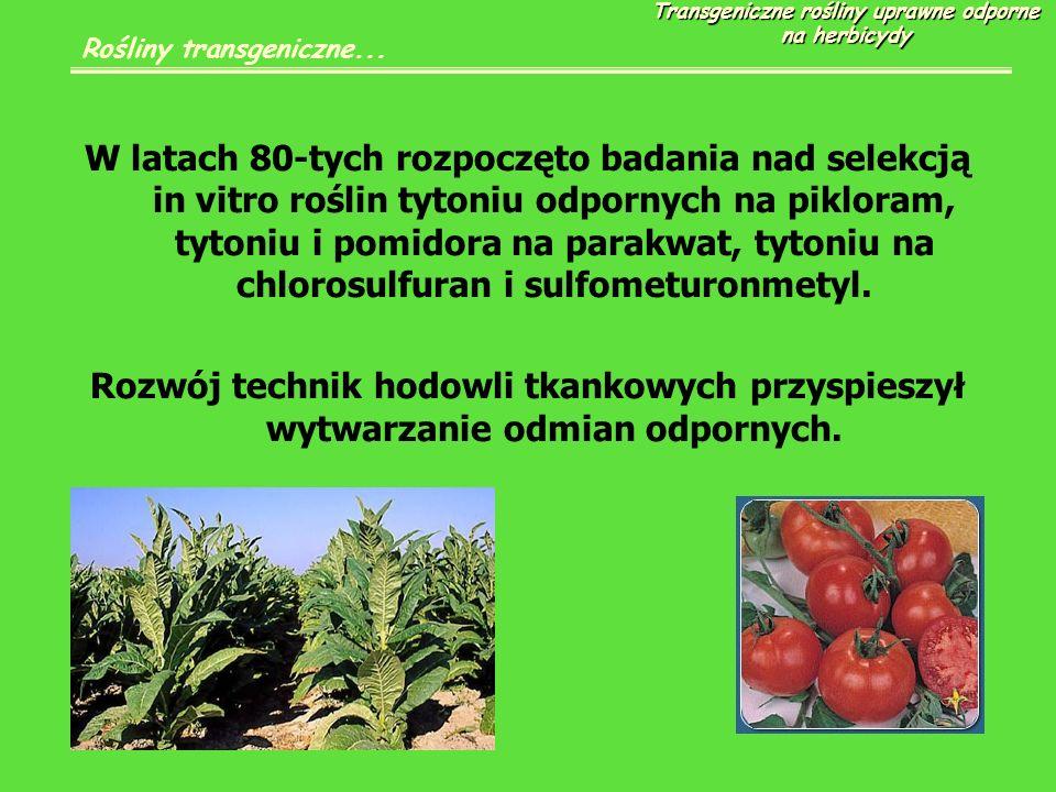W latach 80-tych rozpoczęto badania nad selekcją in vitro roślin tytoniu odpornych na pikloram, tytoniu i pomidora na parakwat, tytoniu na chlorosulfuran i sulfometuronmetyl.