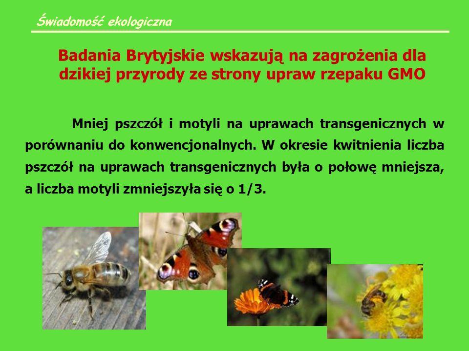 Badania Brytyjskie wskazują na zagrożenia dla dzikiej przyrody ze strony upraw rzepaku GMO Świadomość ekologiczna Mniej pszczół i motyli na uprawach transgenicznych w porównaniu do konwencjonalnych.