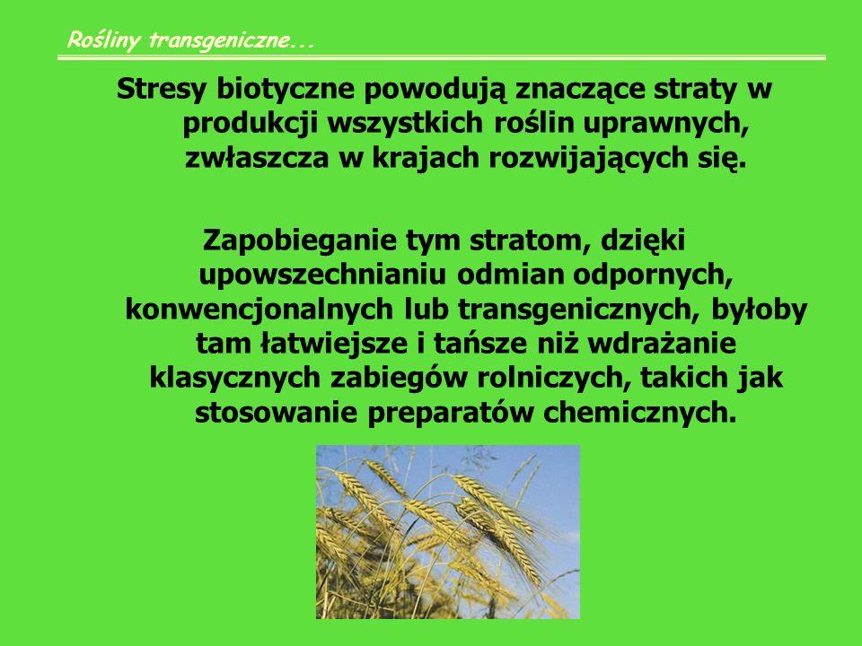 Niezwłocznie należałoby w tym celu wykorzystać odmiany odporne, już zarejestrowane w innych krajach, kontynuując jednocześnie badania ukierunkowane na wyhodowanie lokalnych odmian odpornych na szkodniki i choroby wirusowe.