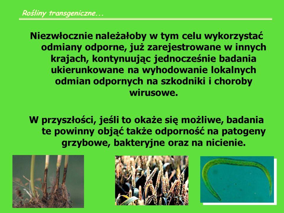Jednak bierze się pod uwagę niebezpieczeństwo szybkiego rozwoju odporności owadów, gdyż populacje owadów będą poddane stałej presji selekcyjnej na toksynę podczas żerowania na roślinach transgenicznych i szybko mogą się uodpornić.