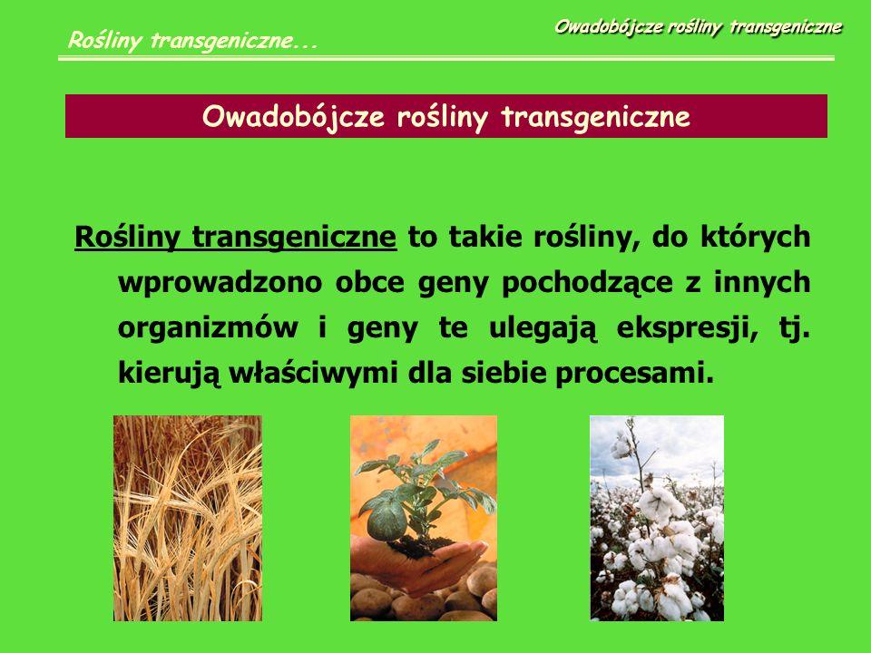 Rośliny transgeniczne to takie rośliny, do których wprowadzono obce geny pochodzące z innych organizmów i geny te ulegają ekspresji, tj.