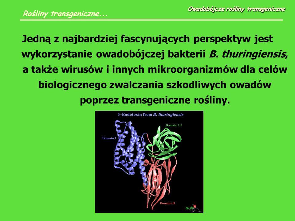 Jedną z najbardziej fascynujących perspektyw jest wykorzystanie owadobójczej bakterii B.