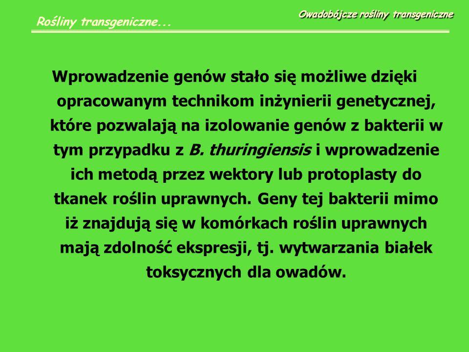 Stwierdzono na przykład że u buraka za odporność na glyfosat odpowiedzialny jest gen produkujący syntezę fosforanu kwasu szikimowego.