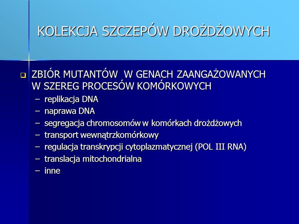 KOLEKCJA PLAZMIDÓW PLAZMIDY NIOSĄCE SKLONOWANE GENY, SŁUŻĄCE DO BADANIA RÓŻNYCH PROCESÓW KOMÓRKOWYCH PLAZMIDY NIOSĄCE SKLONOWANE GENY, SŁUŻĄCE DO BADANIA RÓŻNYCH PROCESÓW KOMÓRKOWYCH –replikacja DNA –naprawa DNA –segregacja plazmidów –transport wewnątrzkomórkowy –segregacja chromosomów (Pseudomonas aeruginosa) PLAZMIDY NIOSĄCE FRAGMENTY GENOMÓW BAKTERIOFAGÓW P1 I P7 PLAZMIDY NIOSĄCE FRAGMENTY GENOMÓW BAKTERIOFAGÓW P1 I P7 PLAZMIDY NIOSĄCE FRAGMENTY PLAZMIDÓW KLINICZNYCH O SZEROKIM SPECTRUM OPORNOŚCI PLAZMIDY NIOSĄCE FRAGMENTY PLAZMIDÓW KLINICZNYCH O SZEROKIM SPECTRUM OPORNOŚCI WEKTORY LINIOWE WEKTORY LINIOWE WEKTORY EKSPRESYJNE WEKTORY EKSPRESYJNE