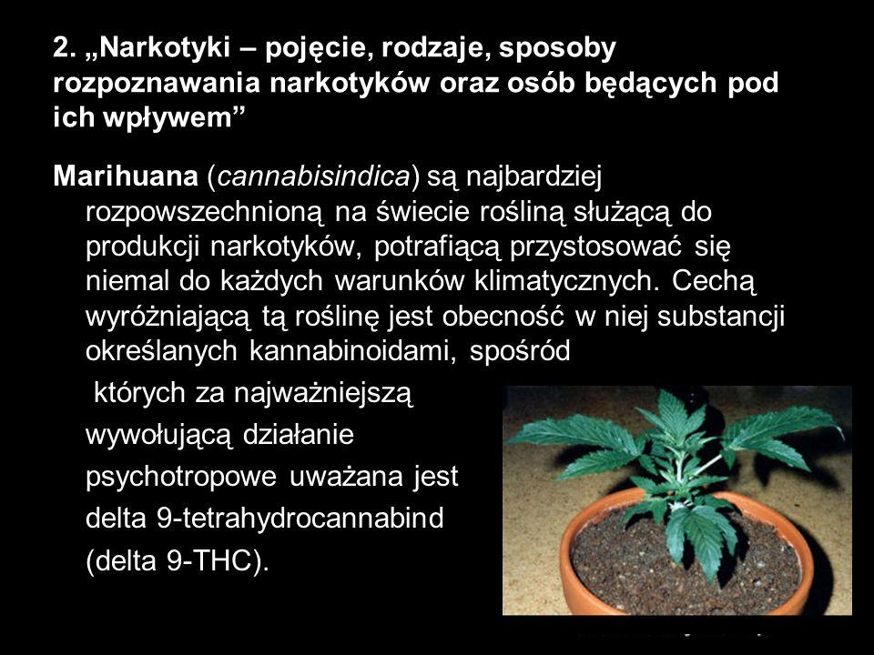 2. Narkotyki – pojęcie, rodzaje, sposoby rozpoznawania narkotyków oraz osób będących pod ich wpływem Marihuana (cannabisindica) są najbardziej rozpows