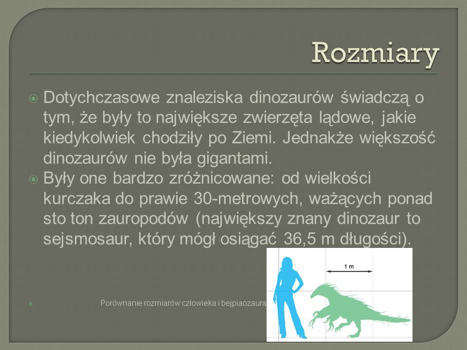 Dotychczasowe znaleziska dinozaurów świadczą o tym, że były to największe zwierzęta lądowe, jakie kiedykolwiek chodziły po Ziemi. Jednakże większość d