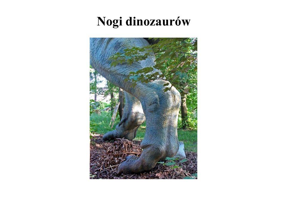 Nogi dinozaurów