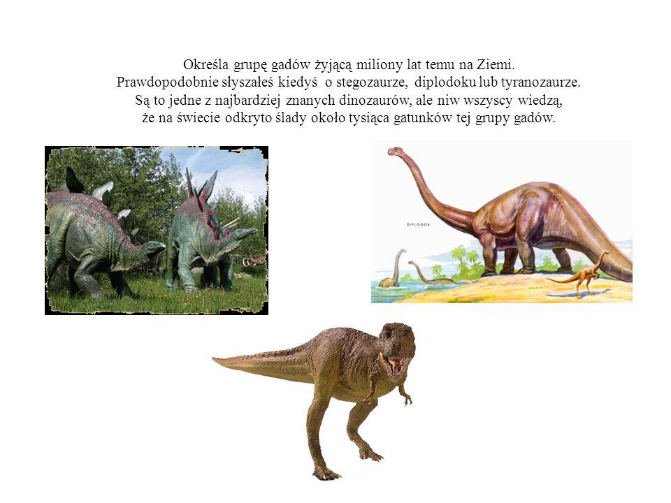 Określa grupę gadów żyjącą miliony lat temu na Ziemi. Prawdopodobnie słyszałeś kiedyś o stegozaurze, diplodoku lub tyranozaurze. Są to jedne z najbard