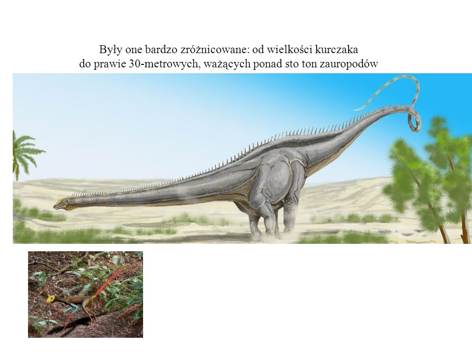 Były one bardzo zróżnicowane: od wielkości kurczaka do prawie 30-metrowych, ważących ponad sto ton zauropodów
