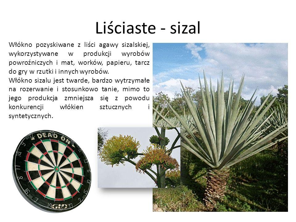 Liściaste - sizal Włókno pozyskiwane z liści agawy sizalskiej, wykorzystywane w produkcji wyrobów powroźniczych i mat, worków, papieru, tarcz do gry w