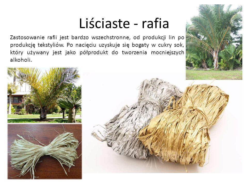 Liściaste - rafia Zastosowanie rafii jest bardzo wszechstronne, od produkcji lin po produkcję tekstyliów. Po nacięciu uzyskuje się bogaty w cukry sok,