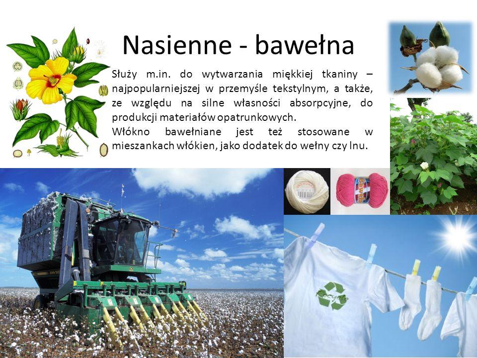 Nasienne - bawełna Służy m.in. do wytwarzania miękkiej tkaniny – najpopularniejszej w przemyśle tekstylnym, a także, ze względu na silne własności abs