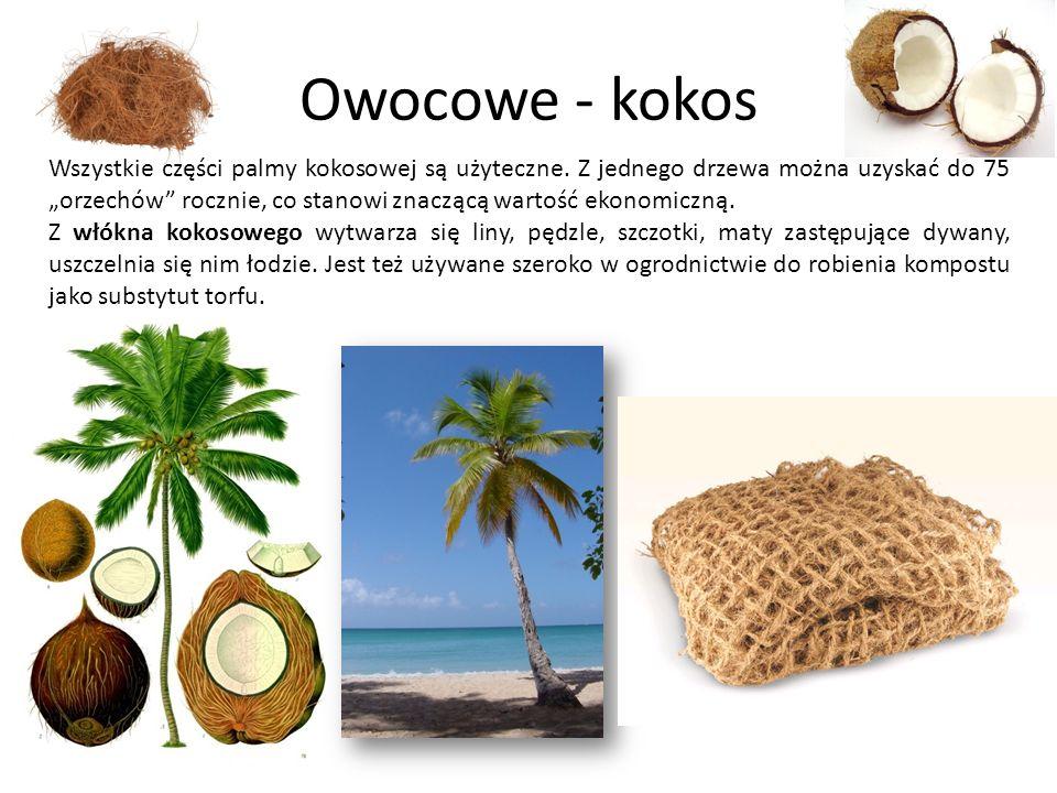 Owocowe - kokos Wszystkie części palmy kokosowej są użyteczne. Z jednego drzewa można uzyskać do 75 orzechów rocznie, co stanowi znaczącą wartość ekon