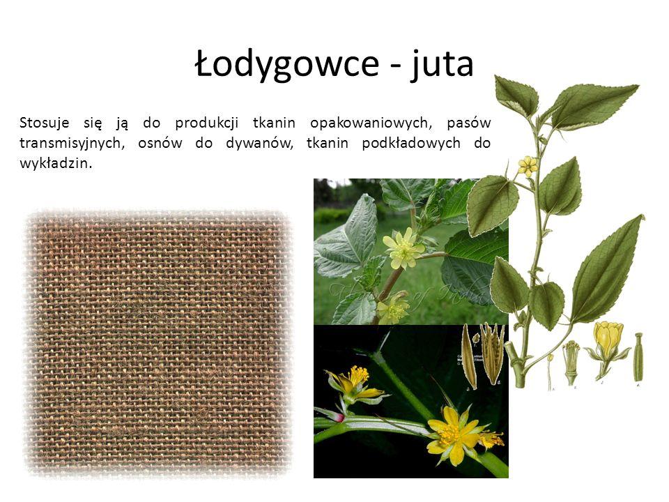 Łodygowce - juta Stosuje się ją do produkcji tkanin opakowaniowych, pasów transmisyjnych, osnów do dywanów, tkanin podkładowych do wykładzin.