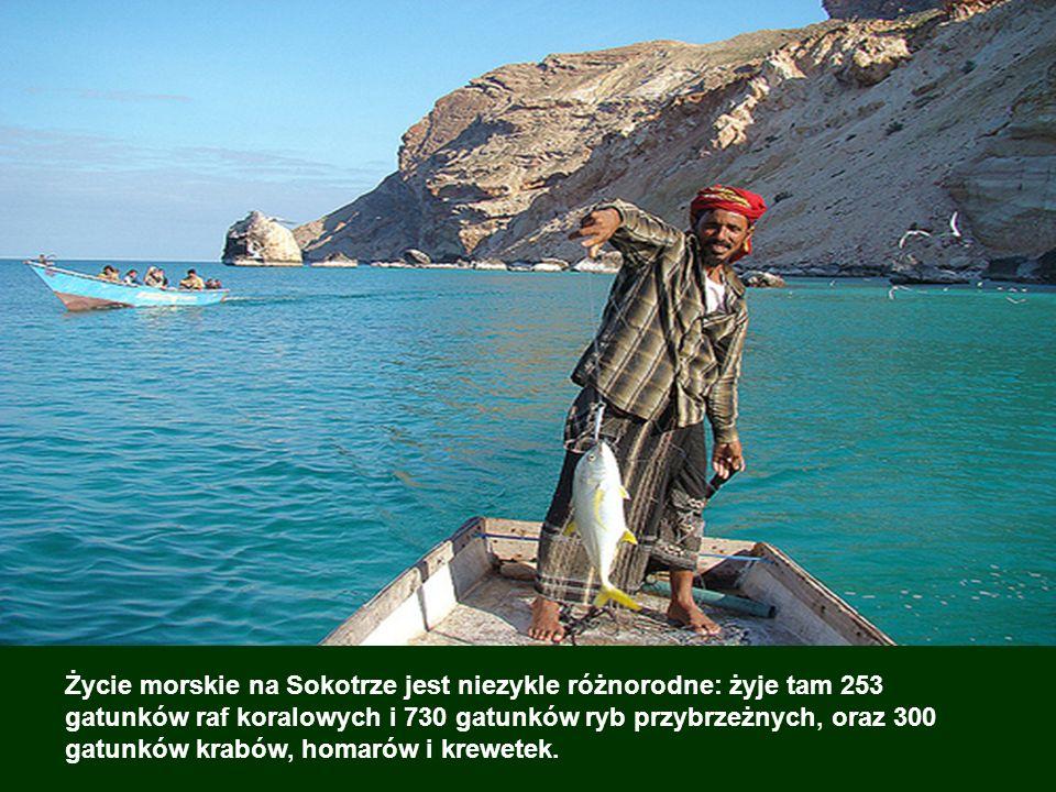 Archipelag jest niezwykły pod względem ogromnej różnorodności roślin i proporcji gatunków endemicznych: 37% gatunków roślin (spośród 900 gatunków), or
