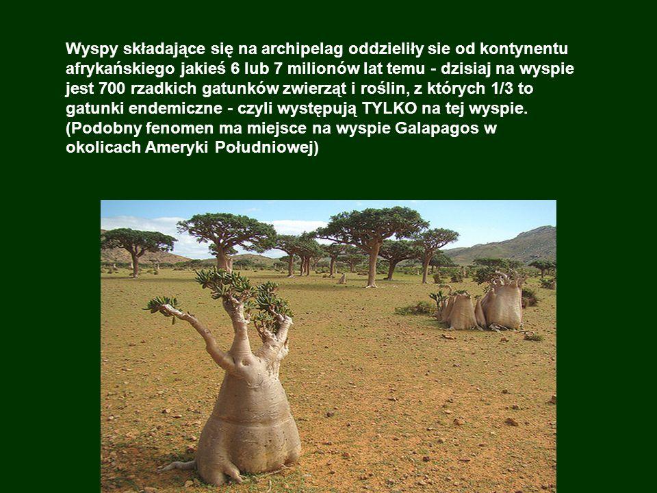 Archipelag jest niezwykły pod względem ogromnej różnorodności roślin i proporcji gatunków endemicznych: 37% gatunków roślin (spośród 900 gatunków), oraz 90% rodzajów gadów, 95% spiralnych dzikich gatunków nie znajduje się nigdzie na świecie.