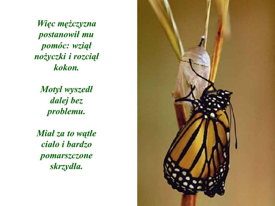 Mężczyzna kontynuował obserwacje, ponieważ spodziewał się, że w każdej chwili skrzydła motyle zaczną grubieć, powiększać się dzięki czemu motyl będzie mógł odlecieć i zacząć żyć.