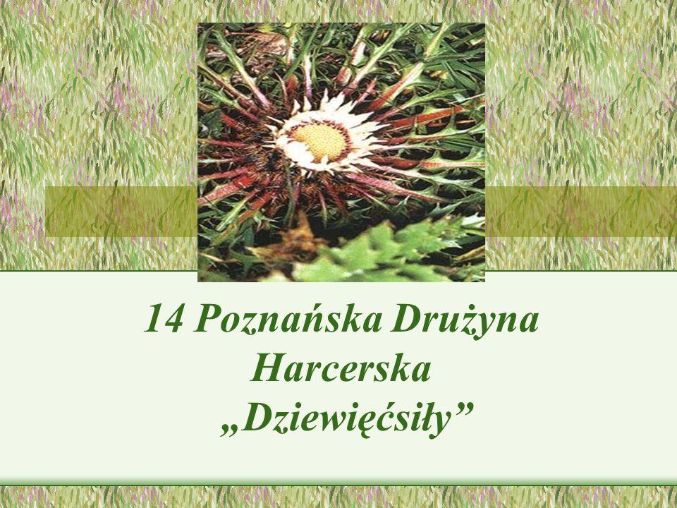 14 Poznańska Drużyna Harcerska Dziewięćsiły