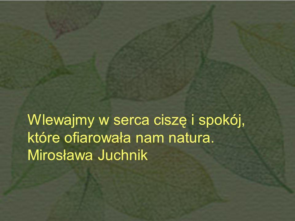 Wlewajmy w serca ciszę i spokój, które ofiarowała nam natura. Mirosława Juchnik
