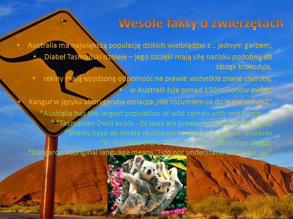 Australia ma największą populację dzikich wielbłądów z… jednym garbem, Diabeł Tasmański istnieje – jego szczęki mają siłę nacisku podobną do szczęk kr