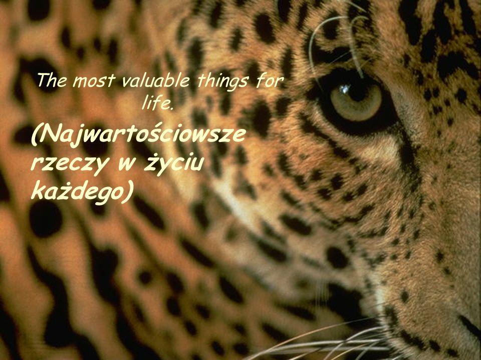 The most valuable things for life. (Najwartościowsze rzeczy w życiu każdego)