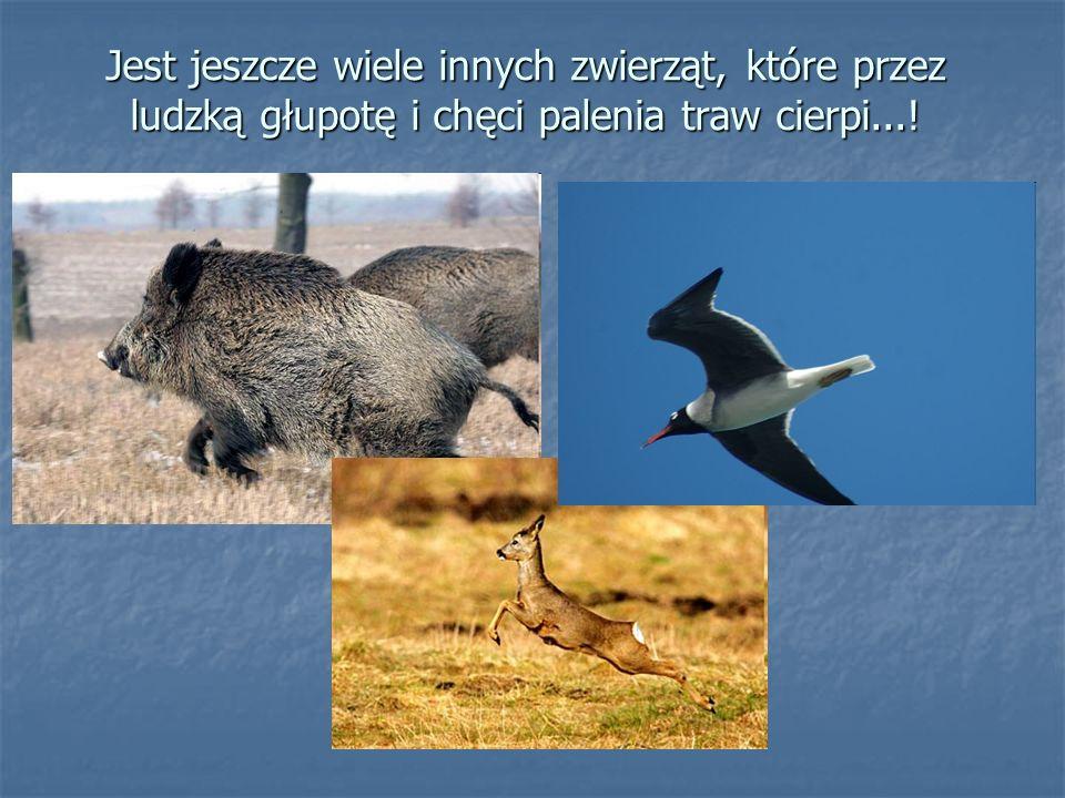 Jest jeszcze wiele innych zwierząt, które przez ludzką głupotę i chęci palenia traw cierpi...!