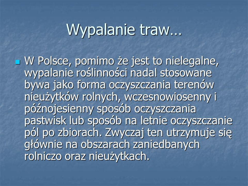 Wypalanie traw… W Polsce, pomimo że jest to nielegalne, wypalanie roślinności nadal stosowane bywa jako forma oczyszczania terenów nieużytków rolnych, wczesnowiosenny i późnojesienny sposób oczyszczania pastwisk lub sposób na letnie oczyszczanie pól po zbiorach.