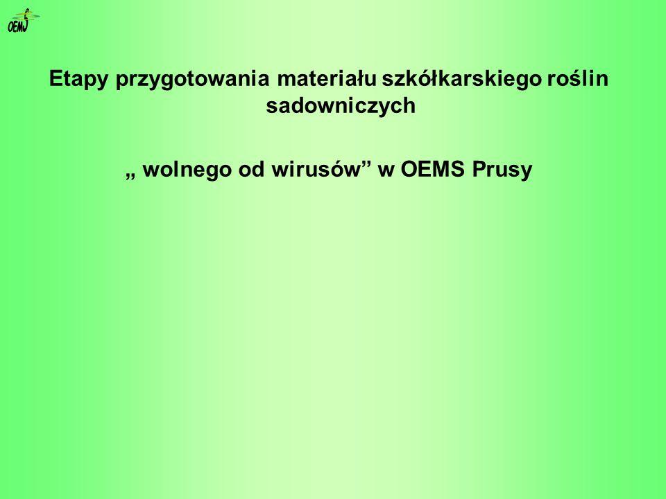 Etapy przygotowania materiału szkółkarskiego roślin sadowniczych wolnego od wirusów w OEMS Prusy
