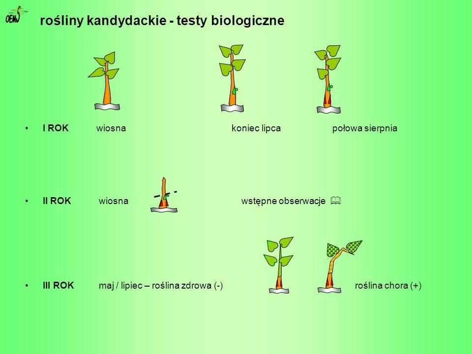 I ROK wiosna koniec lipca połowa sierpnia II ROK wiosna wstępne obserwacje III ROK maj / lipiec – roślina zdrowa (-) roślina chora (+) rośliny kandyda