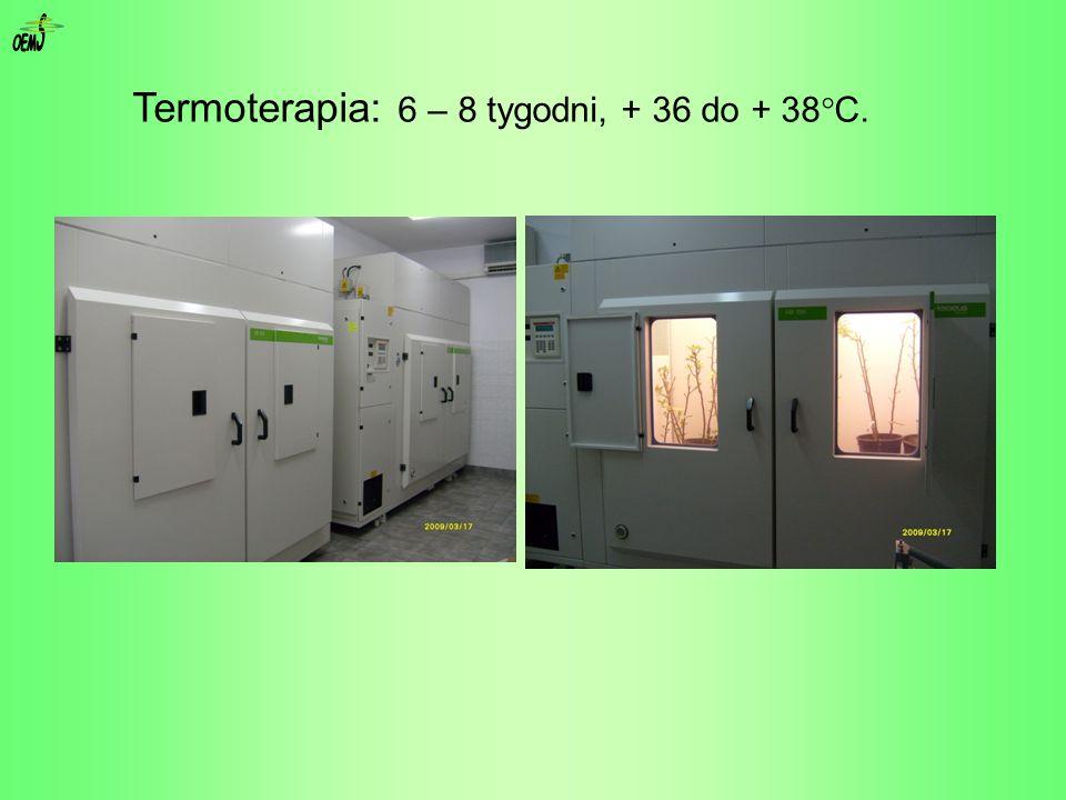 Termoterapia: 6 – 8 tygodni, + 36 do + 38 C.