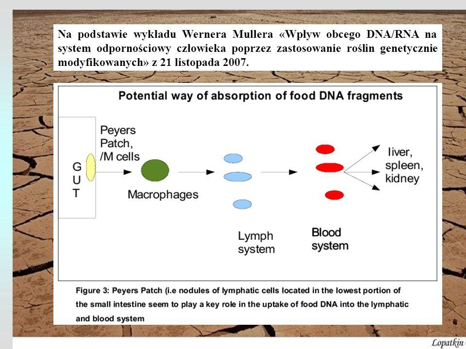 Na podstawie wykładu Wernera Mullera «Wpływ obcego DNA/RNA na system odpornościowy człowieka poprzez zastosowanie roślin genetycznie modyfikowanych» z