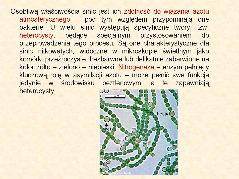Osobliwą właściwością sinic jest ich zdolność do wiązania azotu atmosferycznego – pod tym względem przypominają one bakterie. U wielu sinic występują