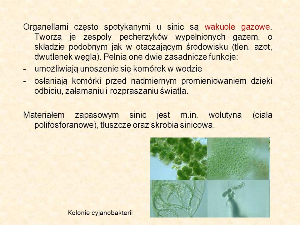Organellami często spotykanymi u sinic są wakuole gazowe. Tworzą je zespoły pęcherzyków wypełnionych gazem, o składzie podobnym jak w otaczającym środ