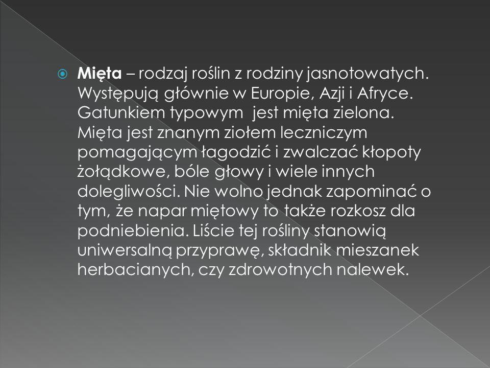 Mięta – rodzaj roślin z rodziny jasnotowatych. Występują głównie w Europie, Azji i Afryce. Gatunkiem typowym jest mięta zielona. Mięta jest znanym zio